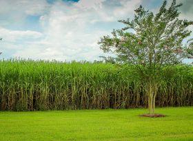 Estudo detalha a mudança no uso da terra pela agricultura brasileira (1990/2014)